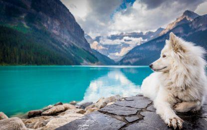 Astuces pour voyager avec son chien