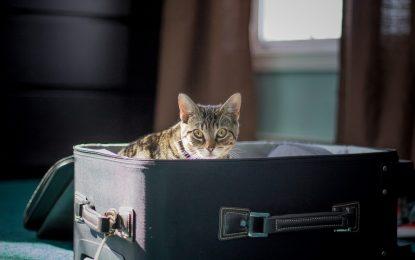Astuces pour voyager avec son chat