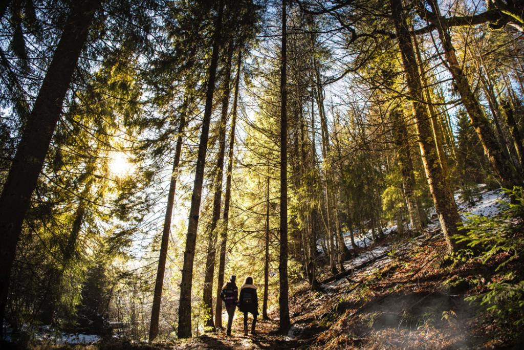 Deux randonneurs dans une forêt
